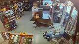 Three Deer Run Wild in a Convenience Store, Ransack It