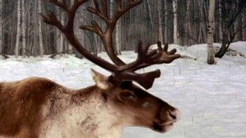 Amazing Antlers
