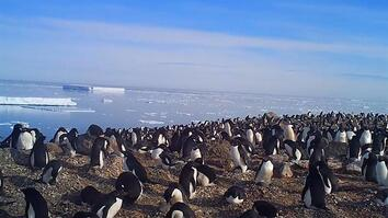 Explore a Hidden Colony of 1.5 Million Antarctic Penguins