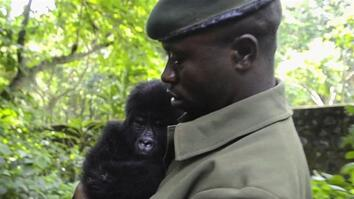 Baby Gorilla Rescue