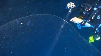 Giant Ball of Squid Mucus Discovered by Divers