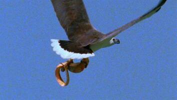 World's Deadliest: Eagle vs. Toxic Snake