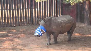 Watch: North Korea Diplomats Accused of Smuggling Ivory and Rhino Horn