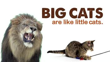 Big Cats Are Like Little Cats