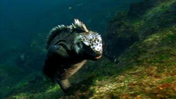 Humans Threatening Galápagos
