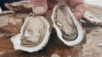 'Eating an Oyster Is Like Kissing the Sea on the Lips'