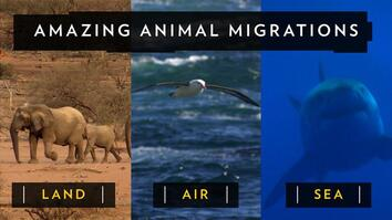 Amazing Animal Migrations by Land, Air, and Sea