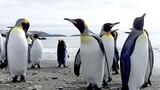 Penguin Overload