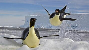 NG Live!: Paul Nicklen: Emperors of the Ice