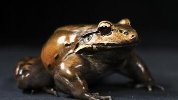 This Tropical Frog Has Special Thumbs Just for Mating