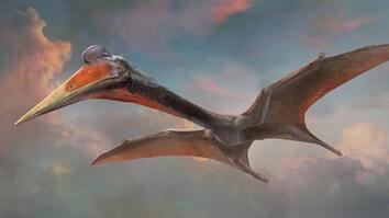 Pterosaurs 101
