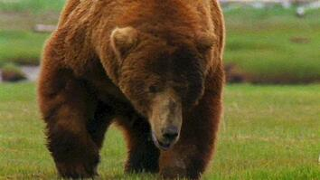 World's Deadliest: Grizzly Hunts With Nose
