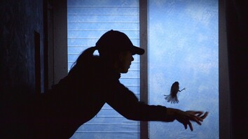 Can We Stop Birds From Crashing Into Windows?