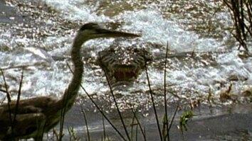 Croc's Breakfast