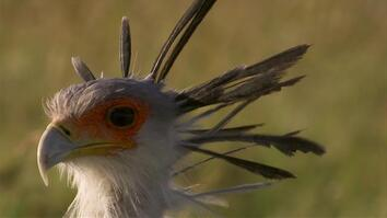 This Bird Takes Down Prey With Its Bone-Shattering Kick