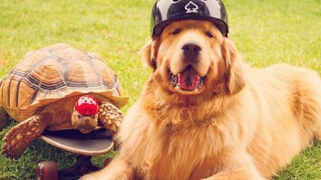 Watch: Rescued Tortoise and Pet Dog Become the 'Best of Friends'