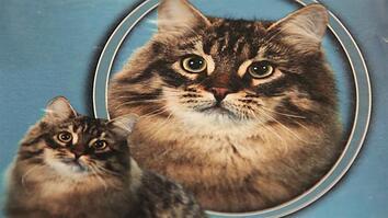 Professional Cat Photographer Shoots Purr-Fect Pictures