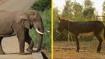 Elephant or Donkey? How Animals Became U.S. Political Symbols