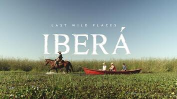 Discover how conservationists are reintroducing extinct wildlife in Iberá National Park