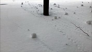 Watch Self-Rolling Snowballs Form in Canada