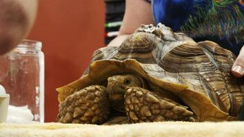 Dr. K's Exotic Animal ER: Shell Shock