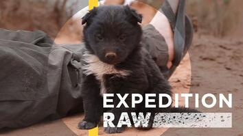 Explorers Save Abandoned Puppy