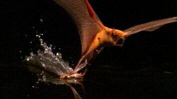 World's Deadliest: Fishing Bats