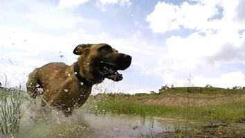 Meet the Dog Trained to Take Down Poachers