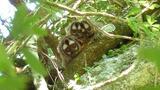 Owl Monkey Fathers Know Best?