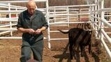 The Incredible Dr. Pol: A Day at the Rodeo