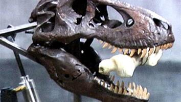 T. Rex Bite
