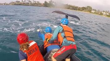 Rescuers Free Humpback Whales Caught in Fishing Gear in Hawaii