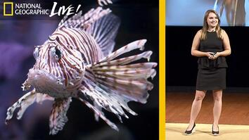 Why Lionfish Should Be Your Favorite Fish to Eat