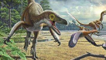 Dinosaurs 101