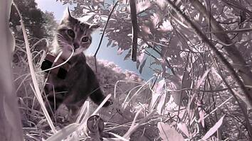 """POV """"Kittycam"""" Reveals These Stray Cats Prey on More Than Birds"""