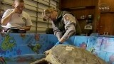 """Cold Stunned"" Turtles Get NASA Rescue"