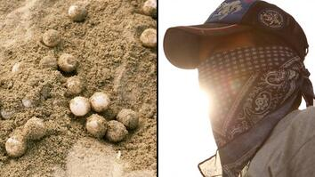 Stealing Turtle Eggs Got People Shot, But The Thievery Continues
