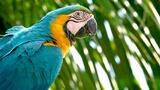 Why Are Wild Parrots Disappearing in Miami?