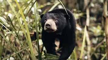 See Why This Little Sun Bear's World Is a Scary Place