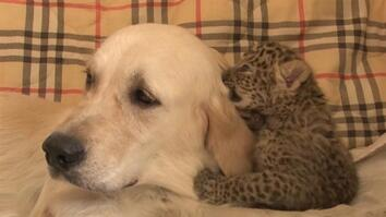 Watch: This Dog Mom Protects a Leopard Cub From Cannibalism