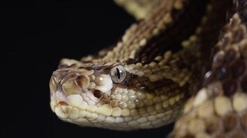 How Fast Can a Rattlesnake Strike? Take a Look, If You Dare.