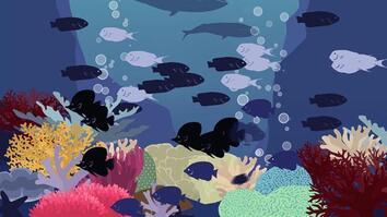How Carbon Dioxide Kills Ocean Life
