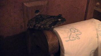 Video Blog: Frogs in the Loo