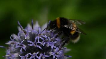 How to Train a Bumblebee: Scientists Study Insect Intelligence