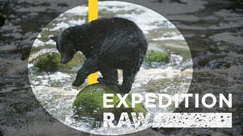 Watch a Hungry Bear Catch Salmon
