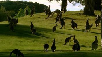 Kangaroo Utopia