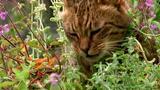 Aphrodisiac Cat