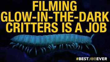 Filming Glow-in-the-Dark Critters