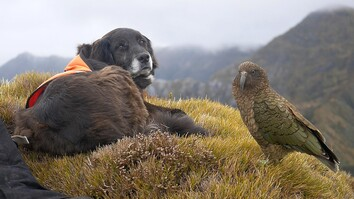 This Amazing Dog Helps to Save Endangered Parrots