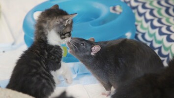 Watch: These Cats Have the Most Unlikely Nannies